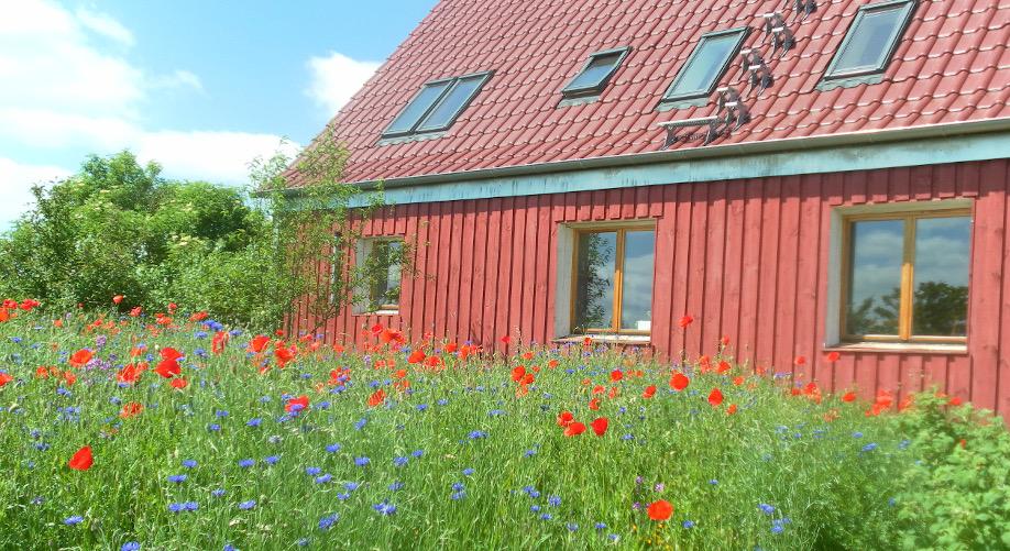 Grenz 24 Haus mit Blumenmwiese